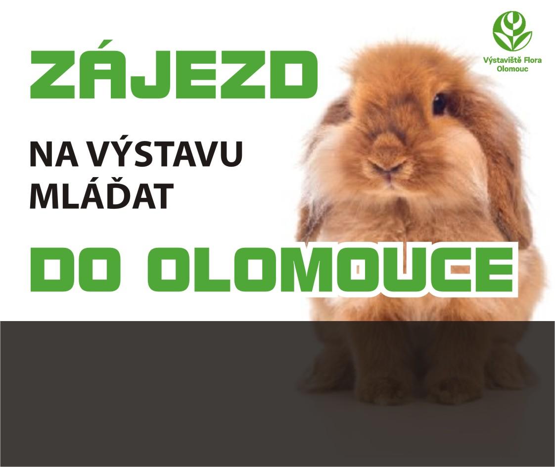 Chovatelská výstava mláďat – Olomouc