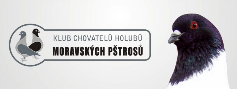Speciální výstava Moravských pštrosů